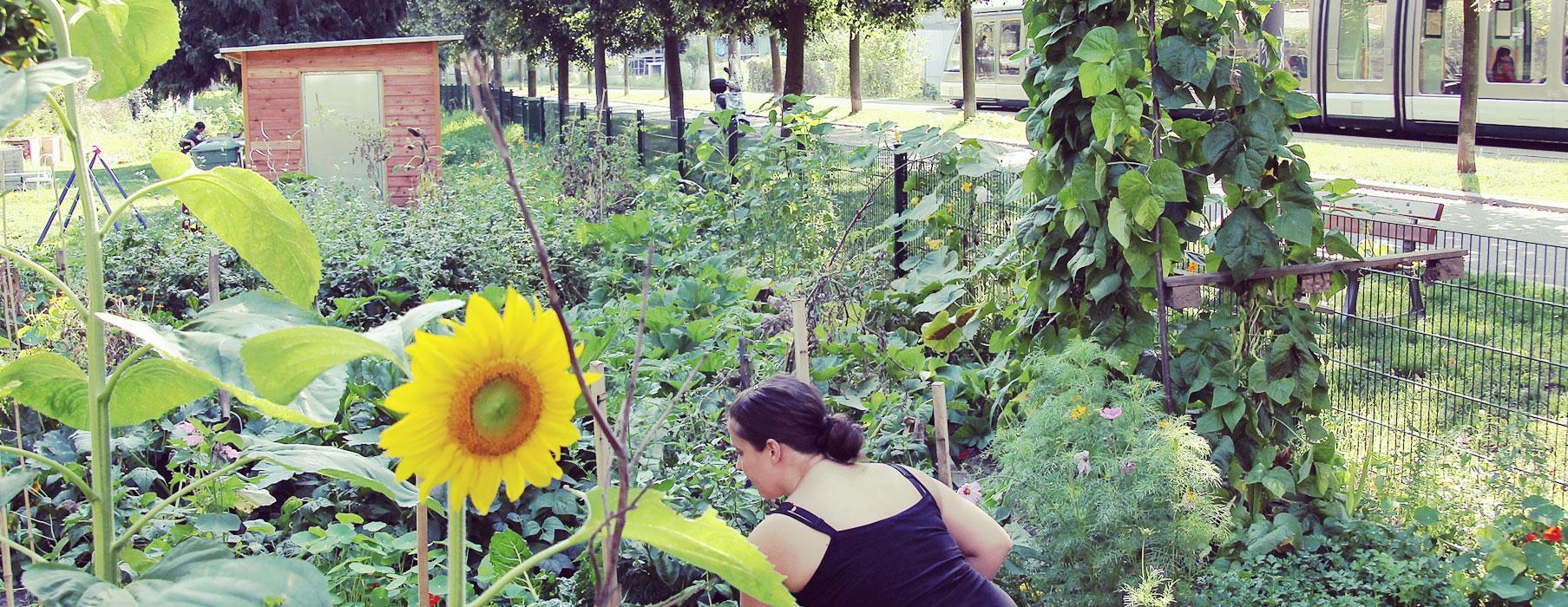 Conventions des jardins partagés