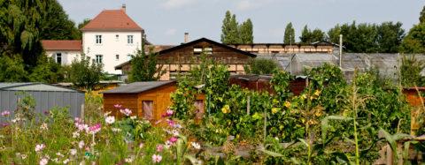 Enquête - Jardiner sans pesticides