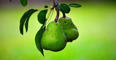 Portes ouvertes de printemps – Association de producteurs de fruits d'Ostwald 29-30 avril