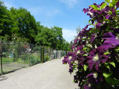 Sortie nature – L'Eurométropole côté Jardins du 03 au 07 juillet