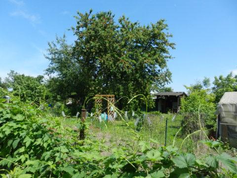Sortie nature – L'Eurométropole côté Jardins les 9 et 23 juin