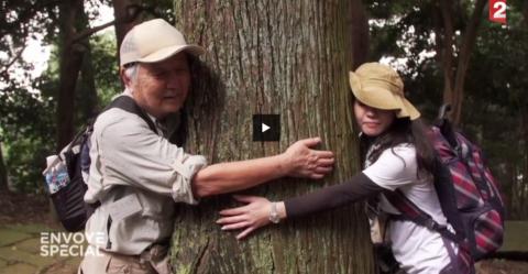 Envoyé spécial : Les arbres sont-ils dotés de sens, comme les Humains ? vidéo