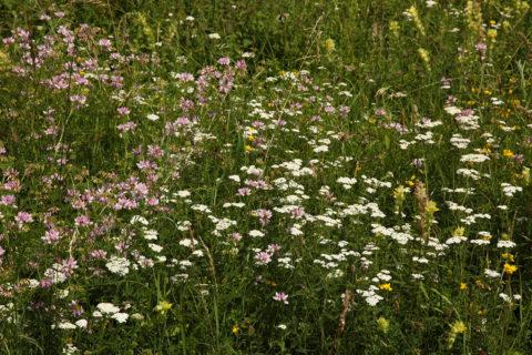 Les prairies et les berges de la Bruche par le SINE le 15 juin