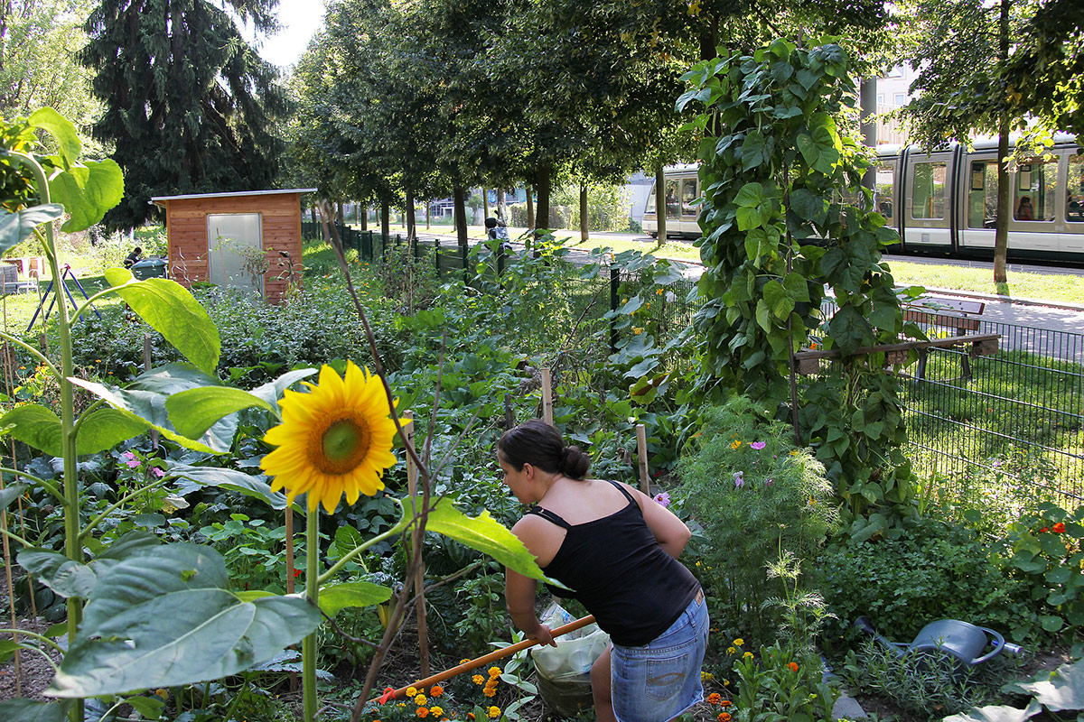 Jardins partagés: quelle(s) culture(s) en partage? le 02 juin