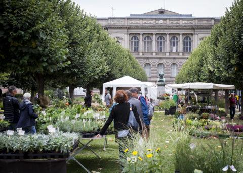 Fête des plantes les 28 & 29 septembre au Jardin de l'Université