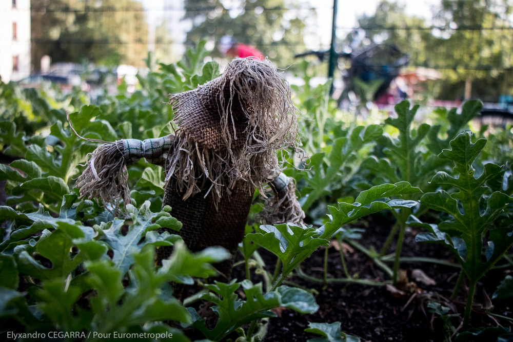 Du 21 septembre au 6 octobre : grande fête des jardins partagés !