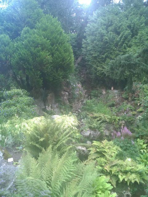 """Formation """"Permaculture et forêts nourricières"""""""