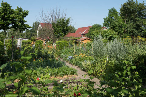 Du 10 avril au mois d'octobre : apprenons à jardiner, sans polluer !