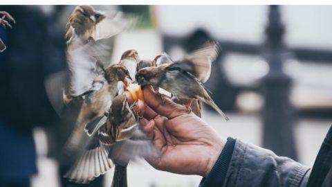 Enquête sur le nourrissage des animaux sauvages en ville